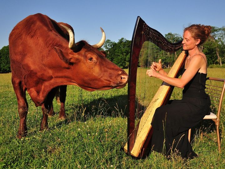 Tmx 1447389863230 Beau And Harp Smaller Stoneham, MA wedding ceremonymusic