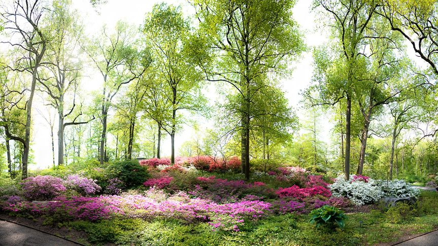 Dreamy woods and flowers