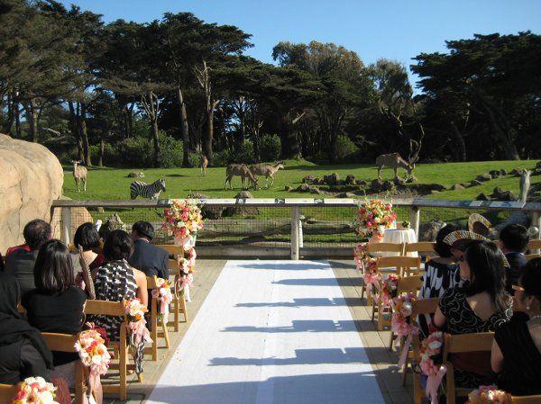 Wedding Peacock Invitations as amazing invitations sample
