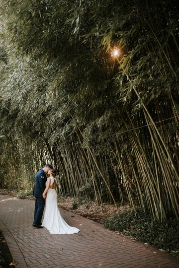 The bamboo forest