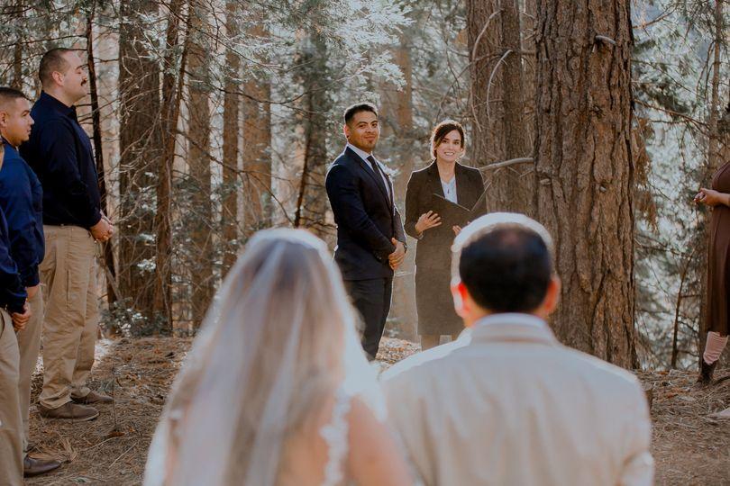 Redwoods: Uv Visions photo