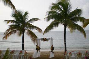 Antilles Lilies
