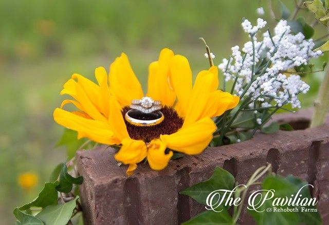 Sunflower with rings