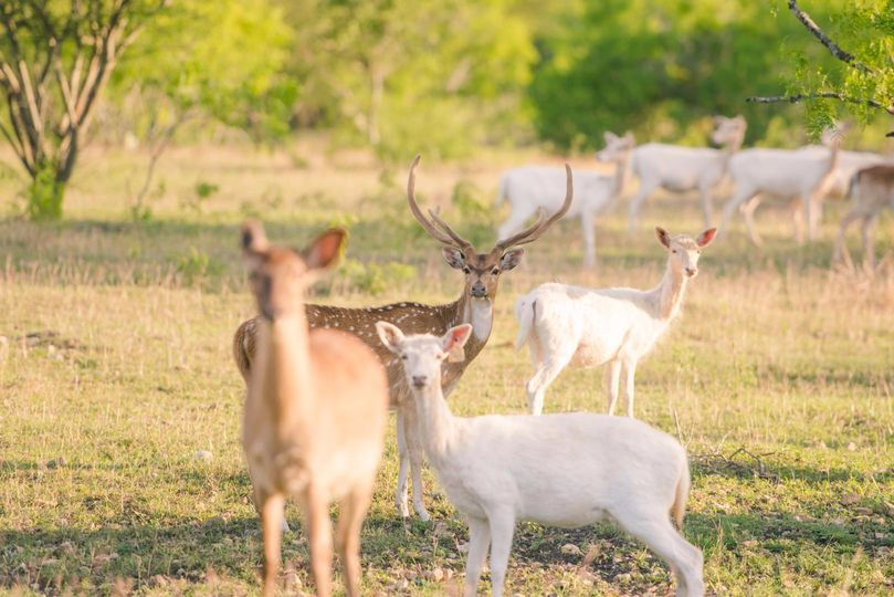 5 species of exotic deer