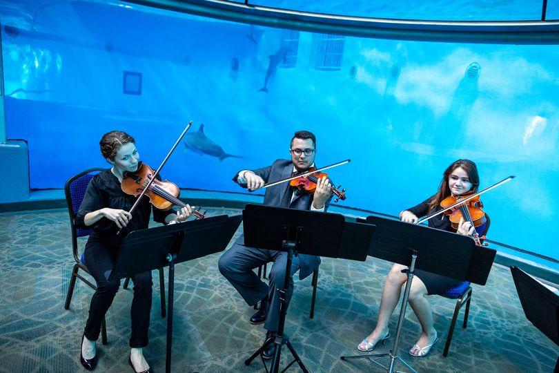Aquarium performance