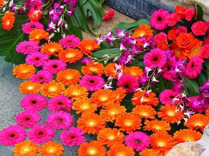Tmx 1426623090284 22 Clermont wedding florist