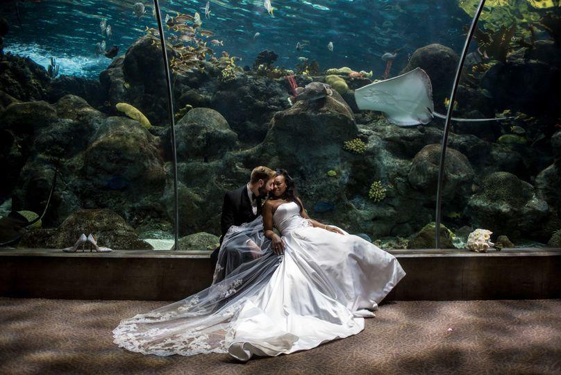 Romantic photo in aquarium