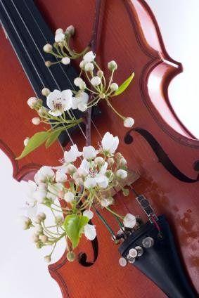 ViolinFlowers