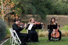 Cello Vida