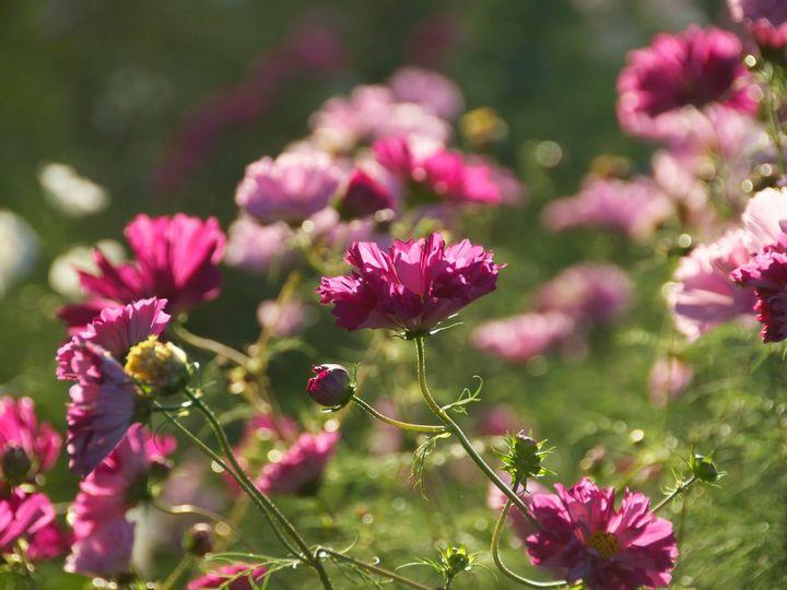 Tmx 12240936 10153978753067118 8669140206536218955 O 51 1031005 Spring Mills, Pennsylvania wedding florist