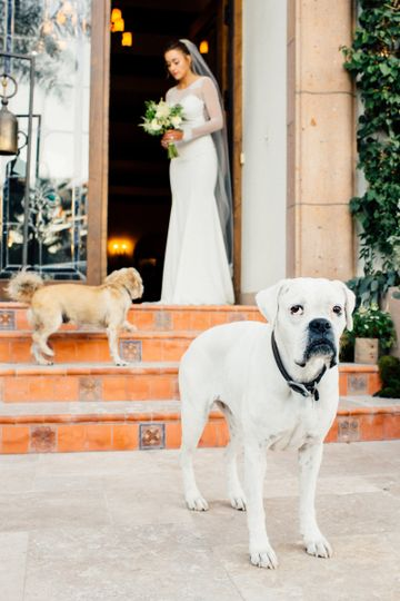 Bridal photo with her pets
