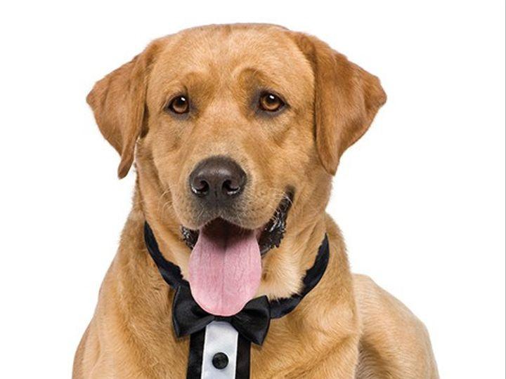 Tmx Tuxedo Dog Collar 51 1635205 1573155606 Cincinnati, OH wedding favor