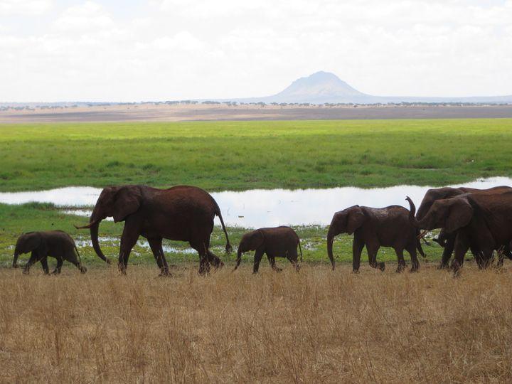 tanzania elephants 51 1867305 157617310274323