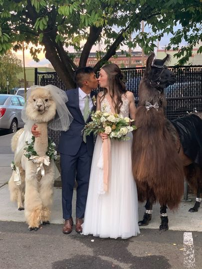 Llama Love: 10.4.2019 Wedding