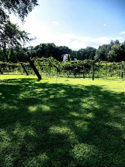 Vineyard Ceremony Site