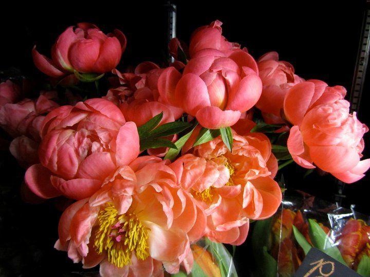 Tmx 1355850948323 2295181824842418034637591295n Millerton wedding florist