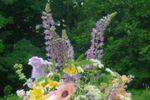 Hyde Park Flowers image
