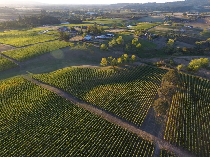 Ariel view of our vineyard