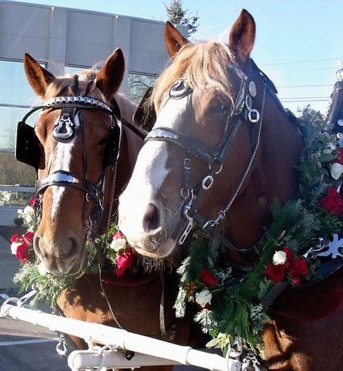 horsebuddies