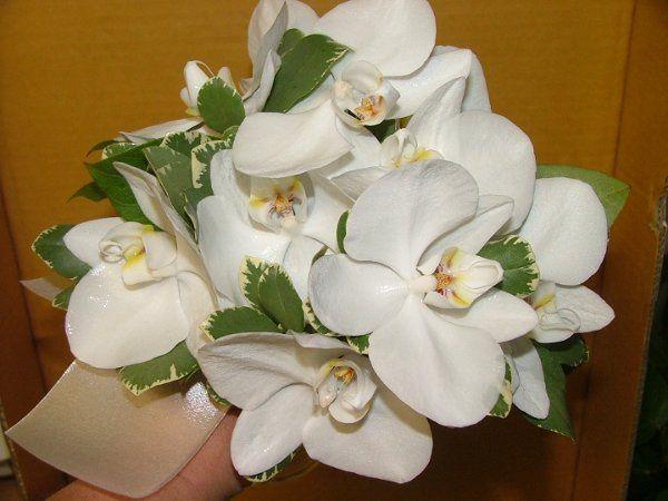 flowers706005