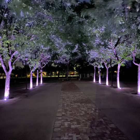LED programable lighting on the trees