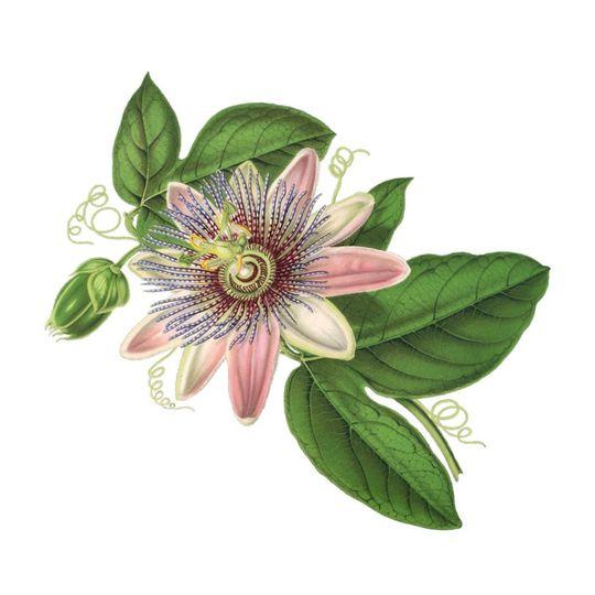 La Petite Fleuriste