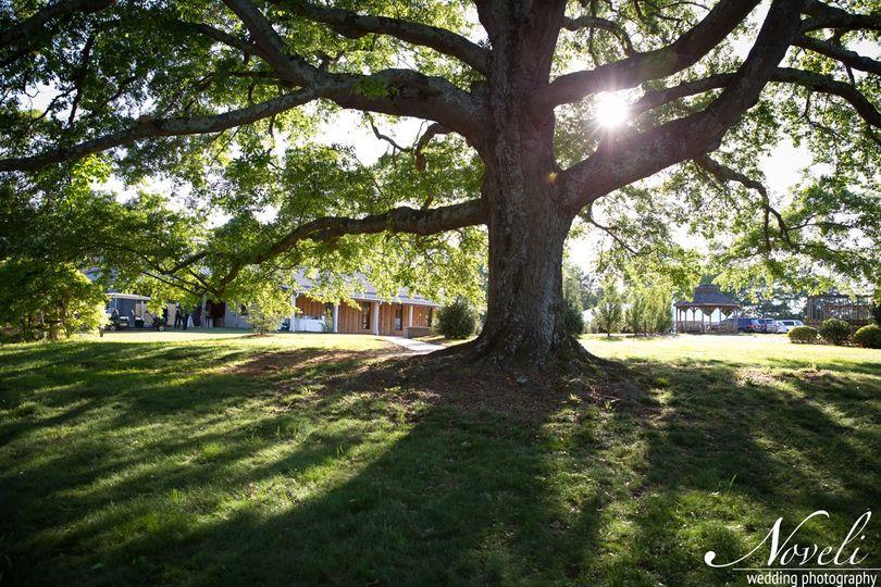 The Live Oak at OBTF