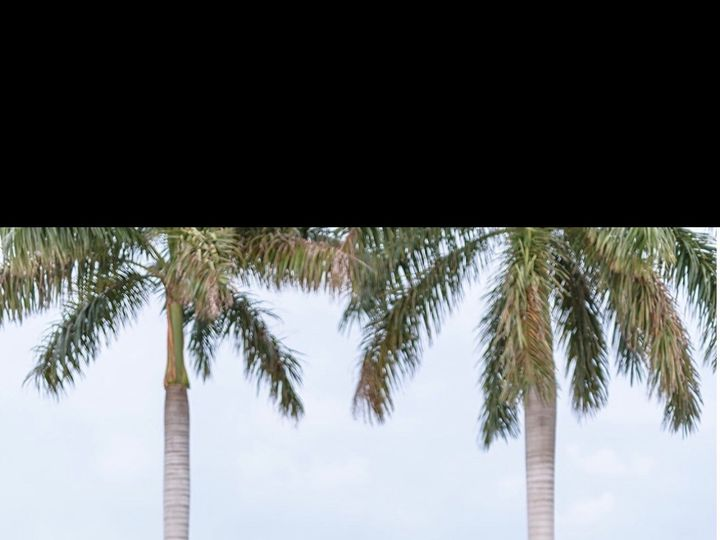 Tmx Img 6796 51 664315 1570731679 Boca Raton, FL wedding florist