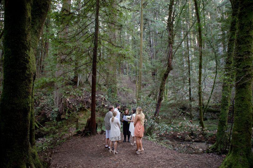 Swept away under the Redwoods to elope in Santa Cruz.