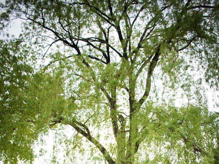 Tmx 1528250941 Bf3dbaab6936e73c 1528250938 5f5cf656fc791fa7 1528250935021 27 20180525 DSC 1807 Clifton Park, NY wedding photography