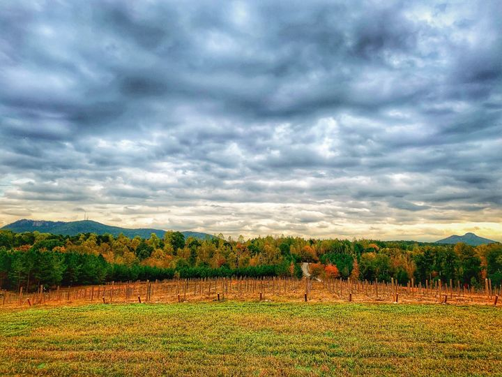 Fall colors in the vineyard