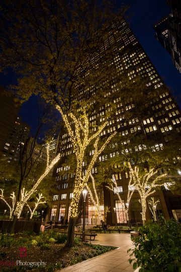 Lighted up trees