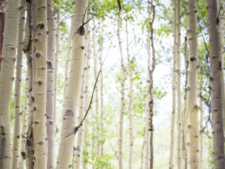 Tmx 17694 2016 08 28 Wed Rexroat 51 182815 160434489170070 Crested Butte, CO wedding photography