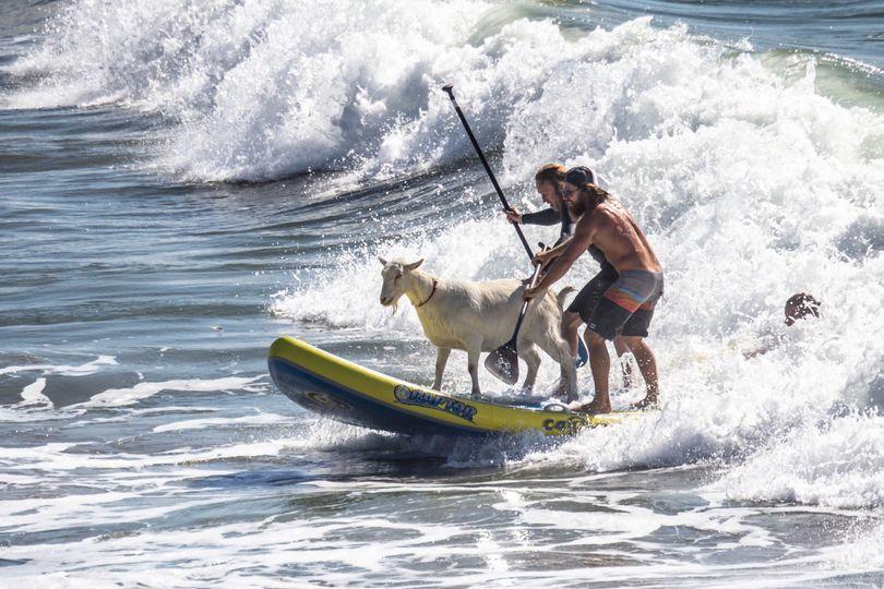 SurfingGoats.com