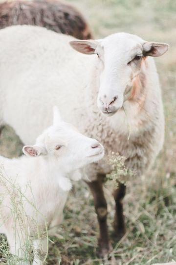 Sweet farm animals