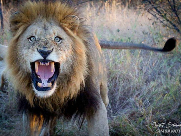 Tmx 1450604598712 Simbavati Safari Lodges 54 Alexandria wedding travel