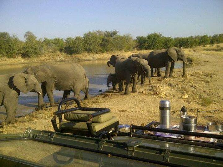 Tmx 1450604617961 Simbavati Safari Lodges 19 Alexandria wedding travel