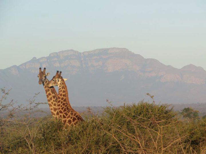 Tmx 1450604801160 Simbavati Safari Lodges 41 Alexandria wedding travel