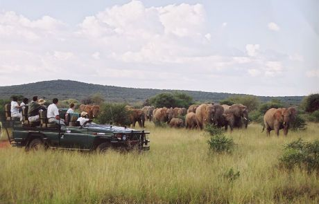 Tmx 1450618261949 Game Drive With Breeding Herd Of Elephantslogo Rem Alexandria wedding travel