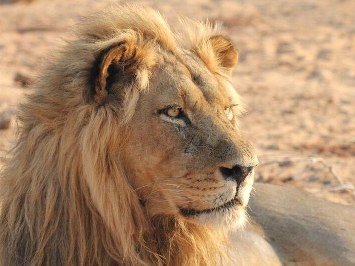 Tmx 1450622449641 Toms Lion Zambia Alexandria wedding travel