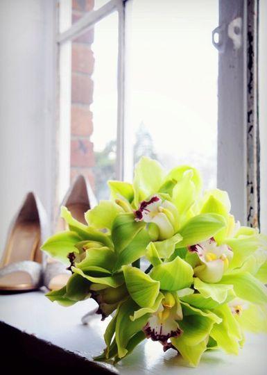 Spring Green - Cymbidium orchids