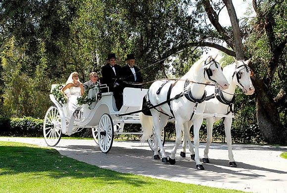 Tmx Horse And Carriage L 51 186125 158835017462870 Englewood, NJ wedding transportation