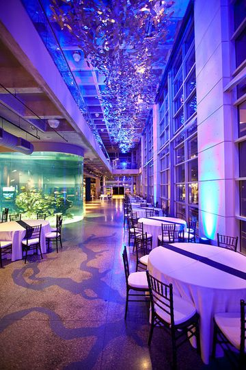 South carolina aquarium venue charleston sc weddingwire 800x800 1370628542469 reception in great hall blue junglespirit Images
