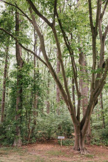 LA Birdie Woodland Area
