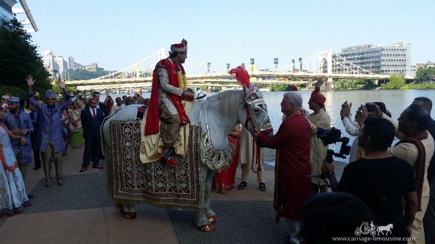 Indian Baraat Horse