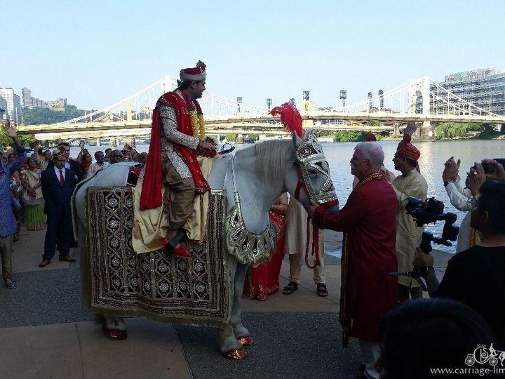 Tmx Baraat Horse 047 51 63825 Wellsville, OH wedding transportation