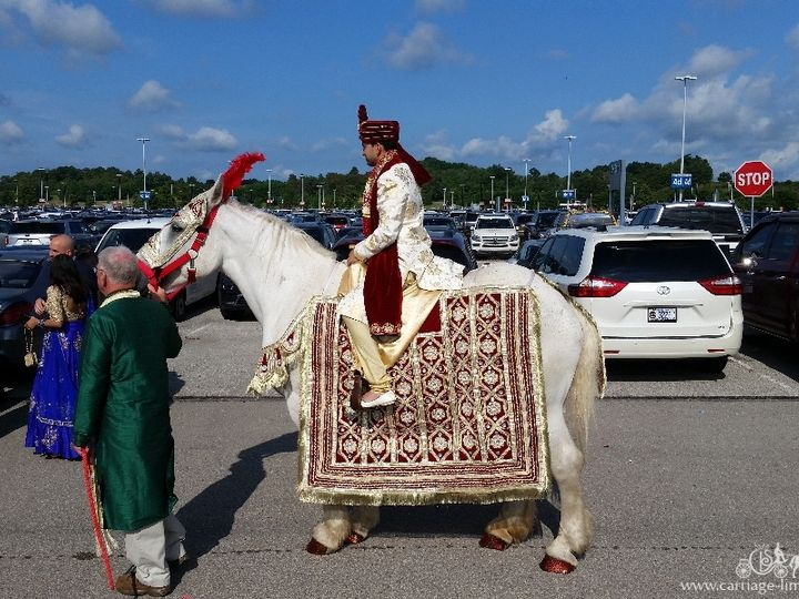Tmx Baraat Horse 076 51 63825 Wellsville, Ohio wedding transportation