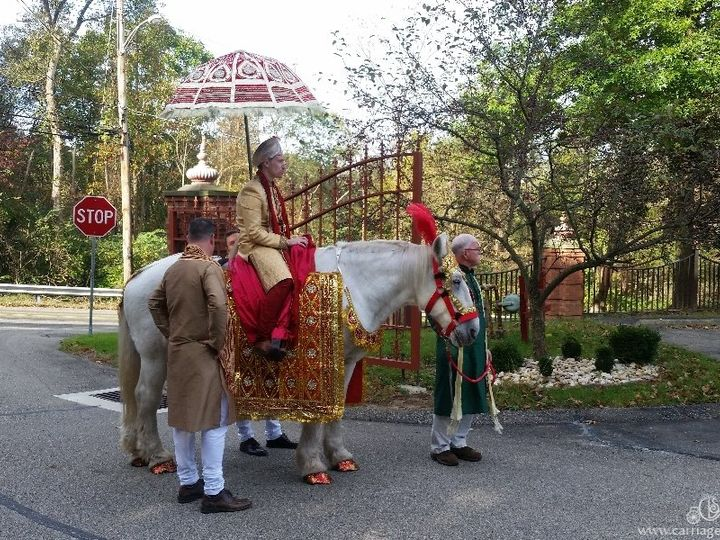 Tmx Baraat Horse 087 51 63825 Wellsville, Ohio wedding transportation