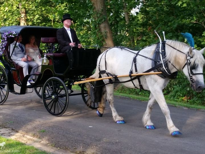 Tmx Horse Drawn Princess Carriage 021 51 63825 1566354638 Wellsville, Ohio wedding transportation