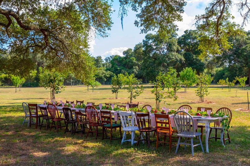 Banquet-style party under the oaks